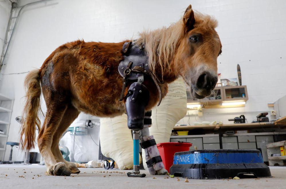 άλογο Αλογάκι άλογα