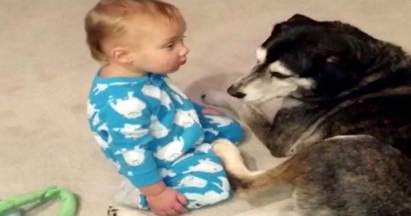 Ο Μπέμπης νυστάζει τόσο πολύ που δεν μπορεί να κρατήσει τα μάτια του ανοιχτά. Προσέξτε τώρα τι θα κάνει ο σκύλος!