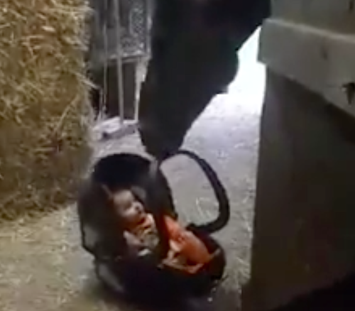μωρό Μητέρα άλογο