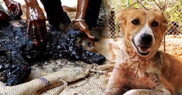 Διασώστες σώζουν κουτάβι που παγιδεύτηκε μέσα σε λαμαρίνα με καυτή πίσσα. Οι στιγμές που ακολουθούν κόβουν την ανάσα