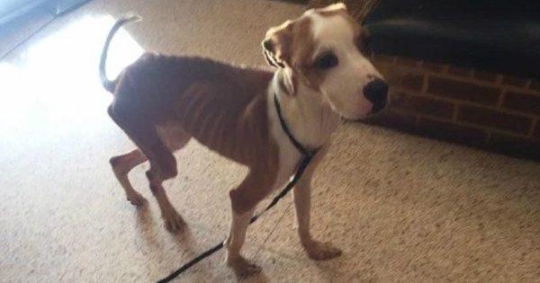 Σοκαριστικό: Σκύλος πέρασε 2 εβδομάδες κλειδωμένος σε μια ντουλάπα χωρίς φαγητό και νερό