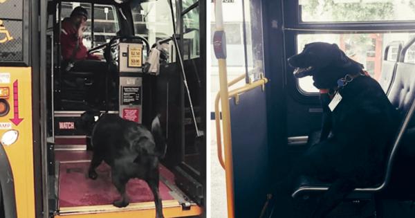 Σκύλος παίρνει μόνος του κάθε μέρα το λεωφορείο για να πάει βόλτα στο πάρκο