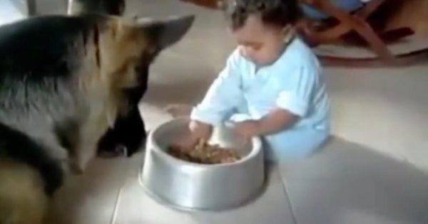 Σκύλος βλέπει το μωρό να του «κλέβει» το φαγητό. Η αντίδραση του; Ανεκτίμητη!