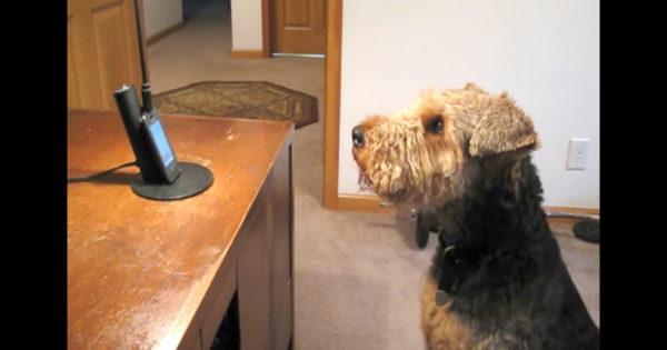 Του έλειπε η μαμά και την πήραν τηλέφωνο για να του μιλήσει. Δείτε ΤΙ της απάντησε ο σκύλος και θα πάθετε πλάκα!