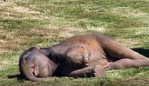 Ελεφαντίνα