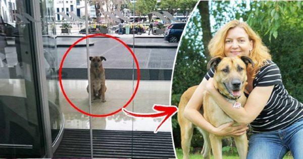 Αεροσυνοδός υιοθετεί αδέσποτο σκύλο που την περίμενε 6 μήνες στην άλλη άκρη του κόσμου