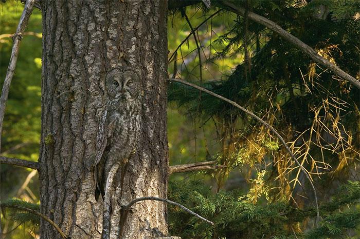 ζώα Δε θα το πιστεύετε : 10 ζώα που γίνονται αόρατα στο περιβάλλον τους