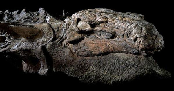Ανακαλύφθηκε μητέρα δεινόσαυρος 110 εκατομμυρίων ετών σε ορυχείο στον Καναδά