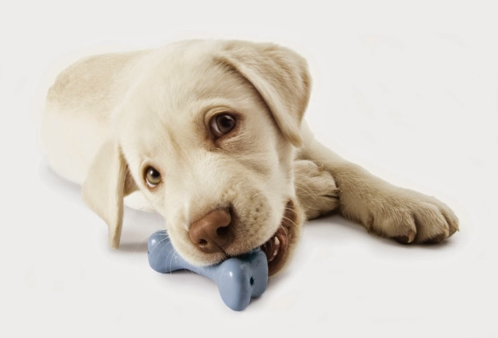 Σκύλος παιχνίδια