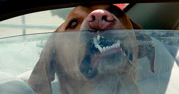 ΠΡΟΣΟΧΗ: Δείτε γιατί δεν πρέπει να αφήνετε ποτέ μόνο του τον σκύλο στο αυτοκίνητο