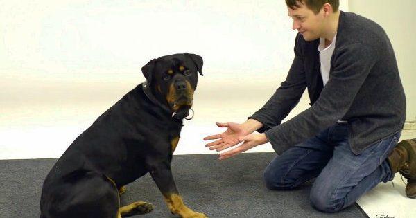 Η αντίδραση σκύλων όταν μάγος τους εξαφανίζει το φαγητό