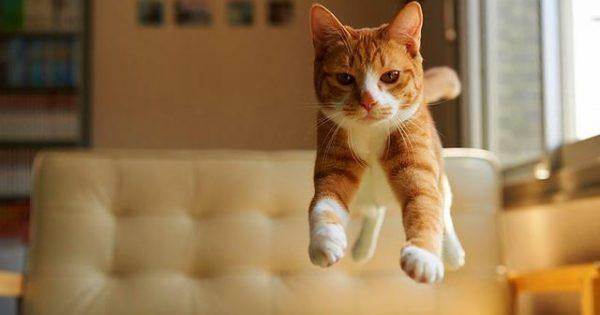 Τροφές που θα πρέπει να αποφεύγονται στη Γάτα