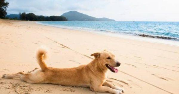 (ΠΡΟΣΟΧΗ)!! Πράγματα που πρέπει να προσέχουν οι ιδιοκτήτες σκύλων το Καλοκαίρι!