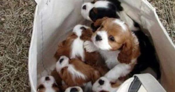 17 φωτογραφίες που αποδεικνύουν ότι οι σκύλοι είναι για τις τσάντες κι όχι για περπάτημα!