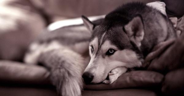 Ο σκύλος σου κουνάει την ουρά του; Να τι προσπαθεί να σου πει.