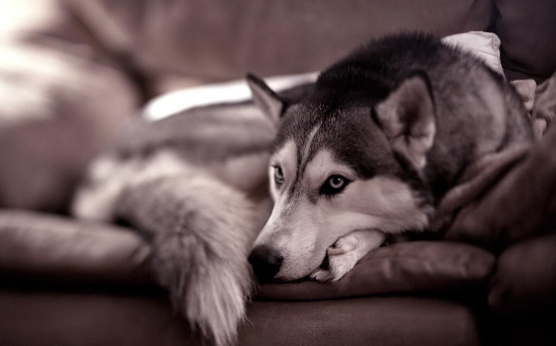 Σκύλος ούρα