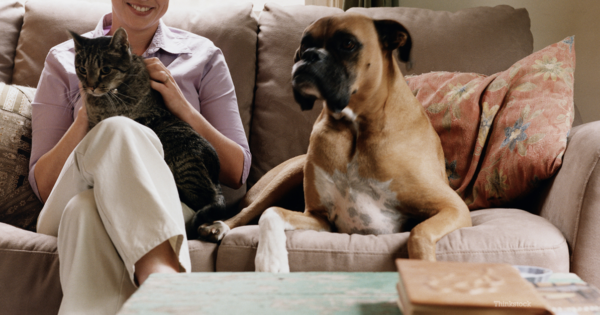 6 «θανάσιμα» λάθη για την ποιότητα ζωής του σκύλου μας