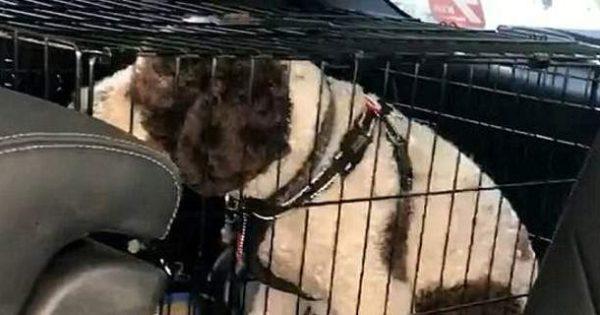 Έσπασε το τζάμι ΙΧ και έσωσε σκύλο -Η ιδιοκτήτρια είχε πάει για πίτσα! [βίντεο]