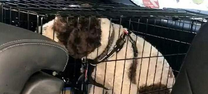 Σκύλος εγκατάλειψη σκύλου