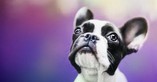 Τα συναισθήματα των σκυλιών που φαίνονται στα μάτια τους