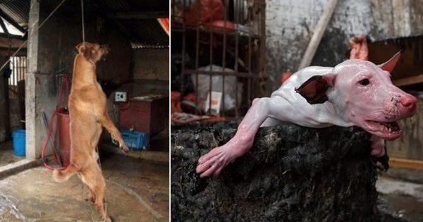 Ακτιβιστές απελευθέρωσαν 149 σκύλους λίγο πριν θανατωθούν για το ετήσιο φεστιβάλ κρέατος στη Νότια Κορέα