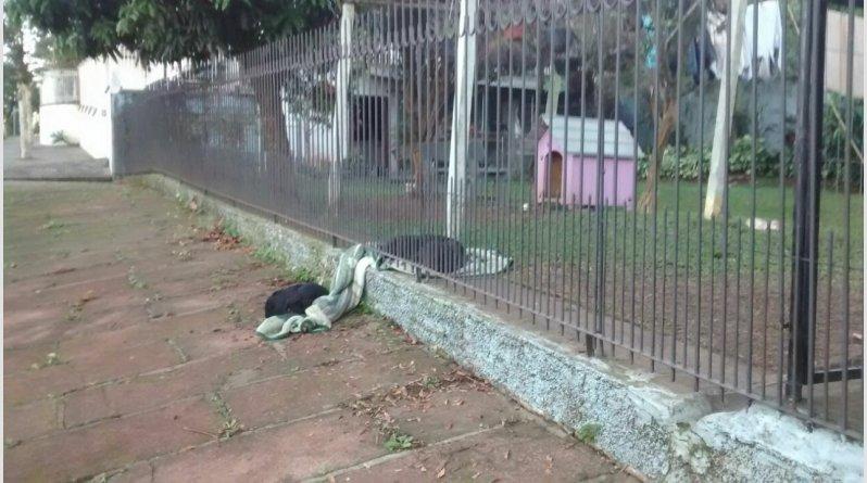 σκύλος μοιράστηκε την κουβέρτα Σκύλος κουβέρτα