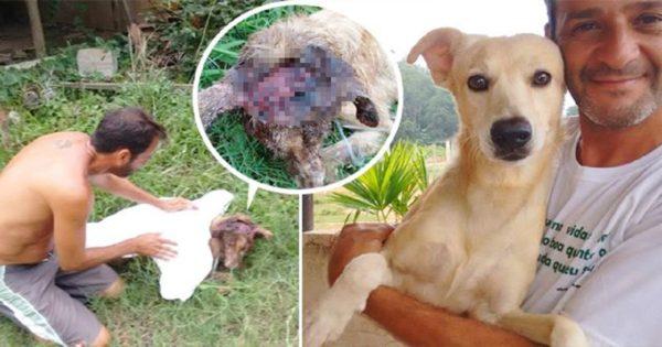 Αδέσποτος σκύλος με τεράστιο τραύμα στο κεφάλι είναι μια ανάσα πριν το θάνατο, μέχρι που εμφανίζεται ο «φύλακας άγγελος» του