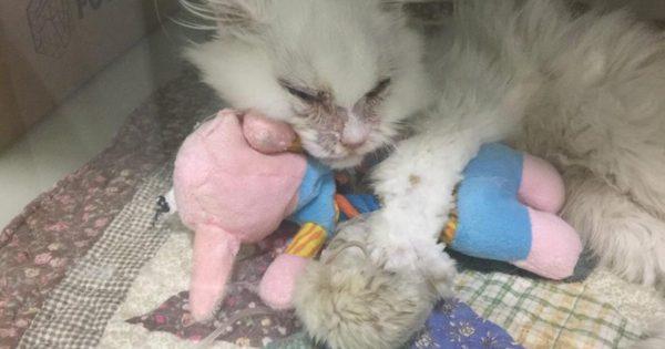 Βρήκαν αυτό το βασανισμένο γατάκι το πήγαν για ευθανασία. Κανείς όμως δεν περίμενε αυτό που θα συνέβαινε στη συνέχεια…