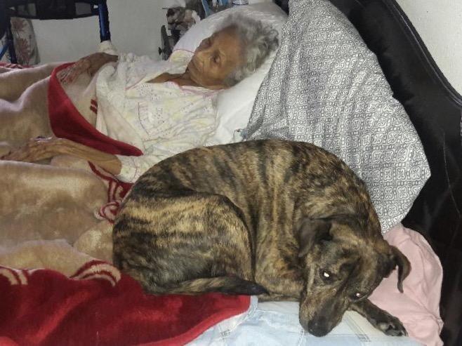 σπίτια Σκύλος σκύλοι αγάπη