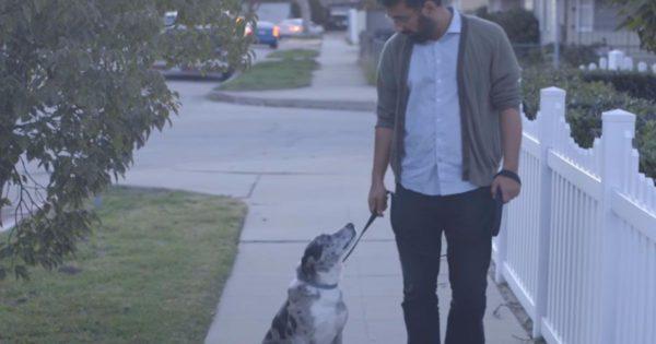 Υιοθέτησε έναν ηλικιωμένο σκύλο από το καταφύγιο. Μια μέρα όμως σταματάει απότομα τη βόλτα τους και τον κοιτάει στα μάτια…
