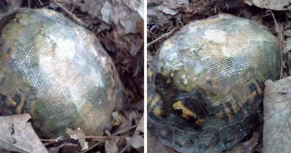 Κτηνίατρος επιδιόρθωσε το καβούκι χελώνας με υαλοβάμβακα και την επέστρεψε στη φύση