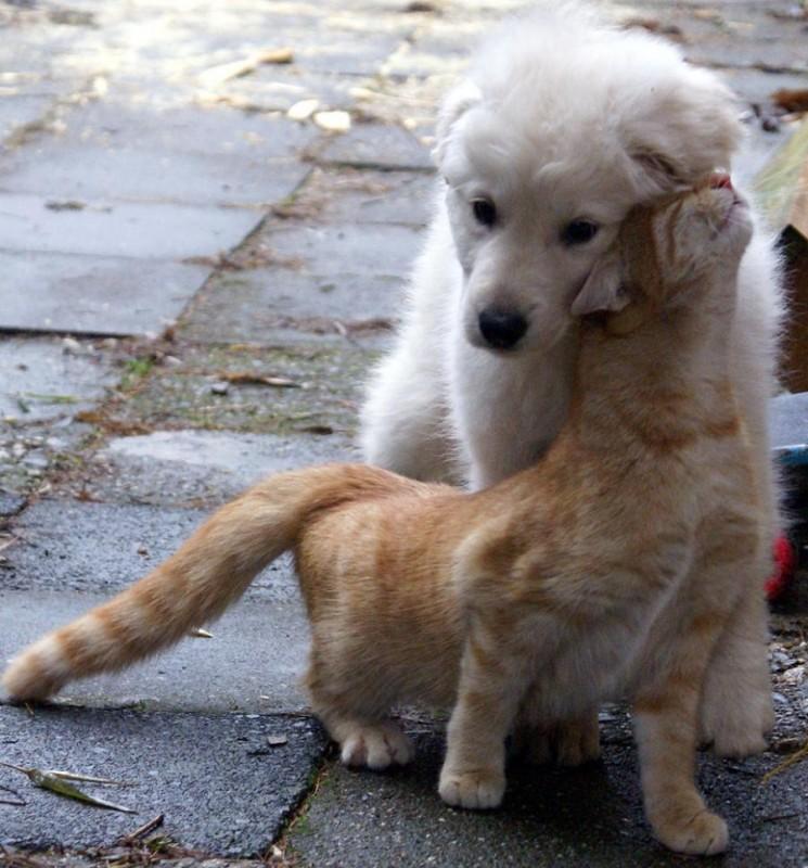 Σκύλος σκύλοι κατοικίδια μόνα στο σπίτι κατοικίδια γάτες Γάτα