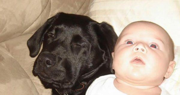 Όλοι της έλεγαν να μην αφήνει το μωρό μαζί με το σκυλί. Δεν περίμεναν όμως μια ΤΕΤΟΙΑ κατάληξη…