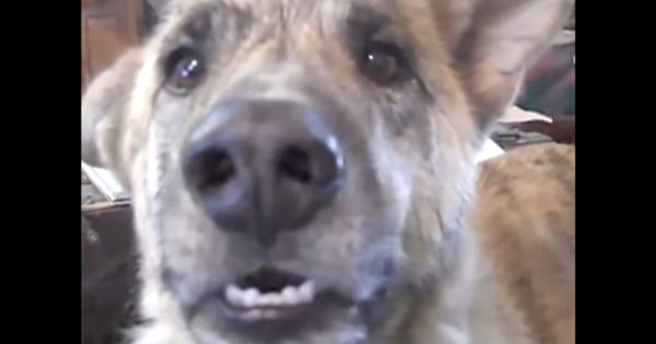 Είπε στο σκύλο της ότι του έφαγε όλο το φαγητό η γάτα. Η αντίδραση του; Θα σας κάνει να λιώσετε!