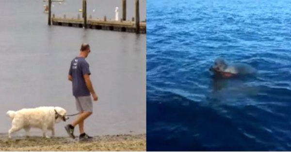 Έβγαλε βόλτα τον σκύλο του όταν τον είδα να πηδάει ξαφνικά μέσα στη θάλασσα. Μόλις κατάλαβε τον λόγο, πάγωσε…