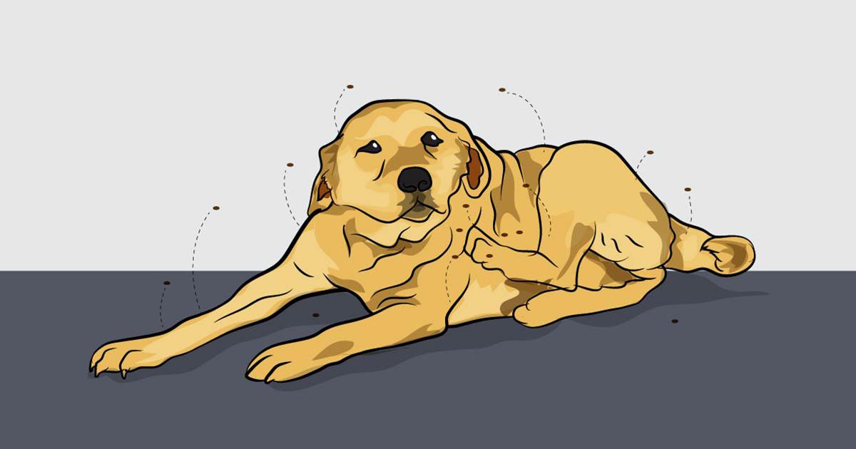 ψύλλοι φυσικοί τρόποι Σκύλος σκύλοι