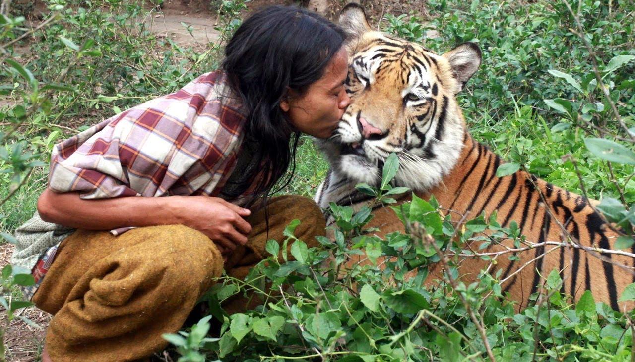 τίγρης Βεγγάλης Τίγρης