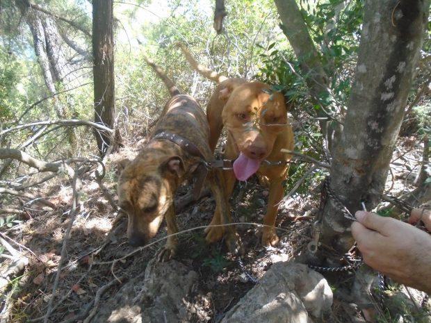 Σκύλος σκύλοι Εγκατάλειψη