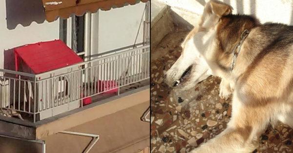 Καταδικάστηκε ιδιοκτήτης σκύλου στη Δράμα γιατί τον άφησε να πεθάνει από την δίψα στο μπαλκόνι