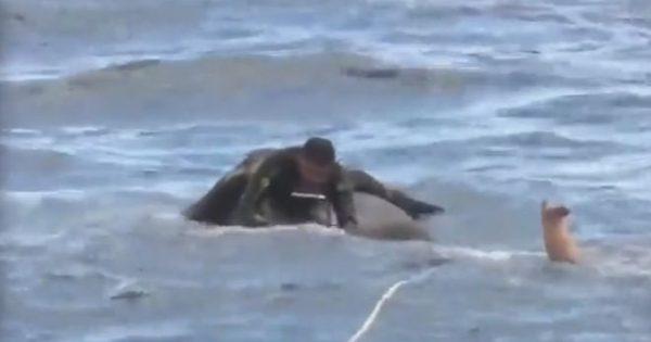 Ελέφαντας κολυμπούσε 16 χιλμ από την ακτή και χρειάστηκε επιχείρηση του ναυτικού για να τον βγάλουν έξω. Συνήθεια το κολύμπι για τους ελέφαντες, αλλά κουράζονται μετά από κάποιες ώρες (βίντεο)…