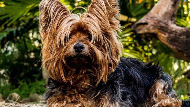 υποαλλεργικά σκυλιά σκυλιά