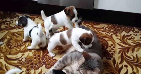 Μοναδικό! Γάτα θηλάζει και σώζει σκυλάκια από βέβαιο θάνατο!