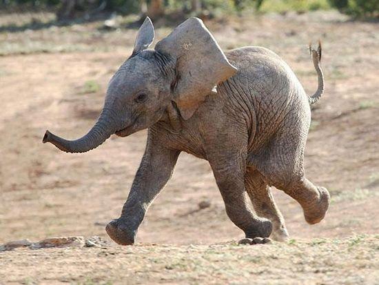χαμογελαστά ζωάκια φώκια Τίγρης Σκύλος σκύλοι σαλάχια σαλάχι μαϊμού λιοντάρια λιοντάρι κουκουβάγιες κουκουβάγια κοάλα καμήλες καμήλα ζέβρες ζέβρα ελέφαντες ελέφαντας δελφίνια δελφίνι γάτες Γάτα Βάτραχος αλεπού