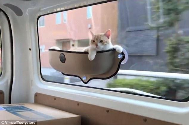 τάση στα ζώα τάση γάτες Γάτα αιώρα για γάτες αιώρα