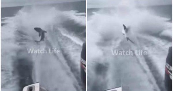 Ψαράδες έβαλαν καρχαρία να κάνει «σκι» και τον κακοποίησαν μέχρι θανάτου. Οργή από τις οργανώσεις προστασίας άγριων ζώων