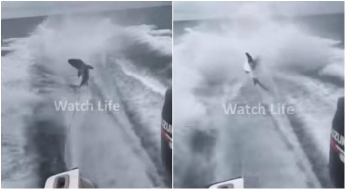καρχαρίας κακοποίηση ζώων