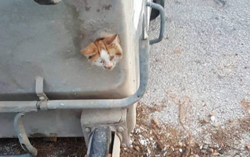 O απεγκλωβισμός γάτας από κάδο απορριμμάτων σε 8 φωτογραφίες