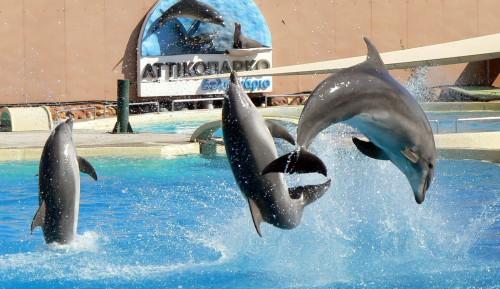 """Καταγγελία για τη βασανιστική μεταφορά/εκδίωξη υπέργηρου θηλυκού δελφινιού απ"""" το Αττικό Πάρκο"""