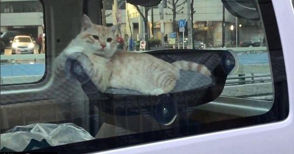 Δείτε την τελευταία τάση στα ζώα : Αιώρα για γάτες