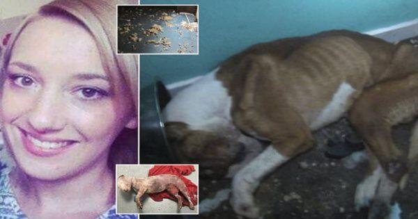 Διαβολική ιδιοκτήτρια ασύλου ζώων που βασάνιζε τα ζώα με τον πιο αρρωστημένο τρόπο καταδικάζεται σε 7 μήνες φυλάκιση